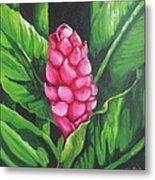 Pink Ginger Lily Bloom Metal Print