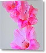 Pink Gladiola Metal Print