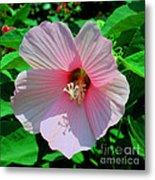 Pink Hibiscus Metal Print