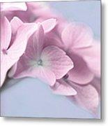 Pink Hydrangea Flower Macro Metal Print