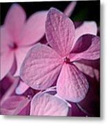 Pink Hydrangea Metal Print by Rona Black