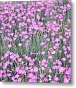 Pink Incarnated Metal Print by Sonali Gangane