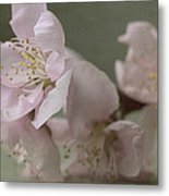 Pink Is The Color Of Happiness Metal Print