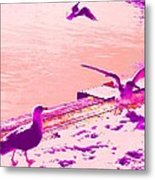 When Seagulls Are Living The Pink Life  Metal Print