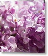 Pink Lilacs Closeup - Featured 3 Metal Print