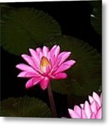 Pink Lilies And Pads Metal Print