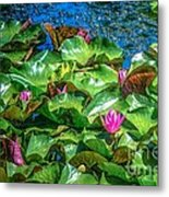Pink Lilly Flowers And Pads Metal Print