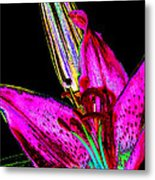 Pink Lily And Bud Pop Art Metal Print