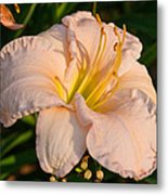 Pink Lily At Sunset 1 Metal Print
