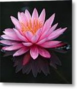 Pink Lily With Reflection Metal Print