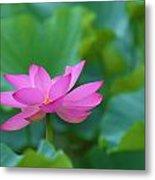 Pink Lotus Blossom Metal Print