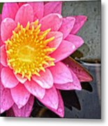Pink Lotus Flower - Zen Art By Sharon Cummings Metal Print