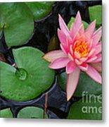 Pink Lotus Love Metal Print