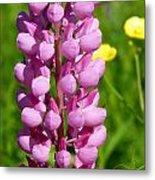 Pink Lupine Flower Metal Print