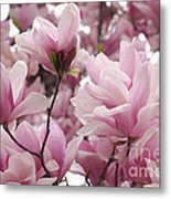 Pink Magnolia Blossoms Washington Dc Metal Print