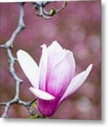 Pink Magnolia Flower Metal Print by Oscar Gutierrez