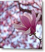 Pink Magnolia Metal Print