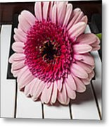 Pink Mum On Piano Keys Metal Print