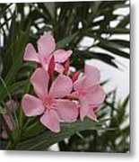 Pink Oleander 4 Metal Print