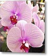 Pink Orchid Duo Metal Print