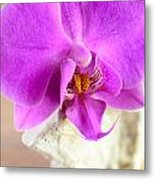 Pink Orchid On White Colored Driftwood Metal Print by Sabine Jacobs