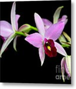 Pink Orchids Cascading Metal Print