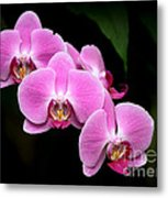Pink Orchids In A Row Metal Print