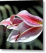 Pink Oriental Lily Reassembled 2 Metal Print