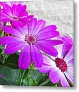 Pink Perciallis Ragwort Flower Art Prints Metal Print