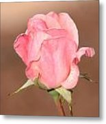 Pink Petals Metal Print by Julie Cameron