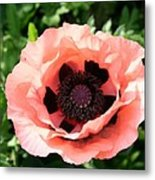 Pink Poppy Bloom Metal Print