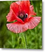 Pink Poppy Flower Among The Green Background Metal Print