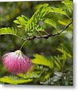 Pink Powderpuff Blossom Metal Print