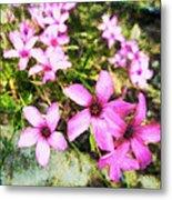 Pink Propellers  Metal Print