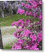 Pink Purple Mississippi Blooms Metal Print