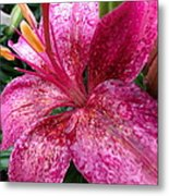 Pink Rain Speckled Lily Metal Print