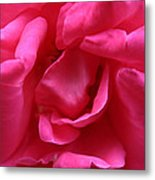 Pink Rose 01 Metal Print
