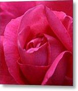 Pink Rose 02 Metal Print