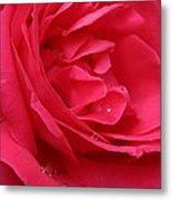 Pink Rose 03 Metal Print