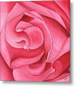 Pink Rose 14-1 Metal Print by William Killen