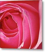 Pink Rose Dof Metal Print