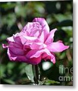 Pink Rose Garden Metal Print