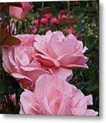 Pink Rose Group I Metal Print