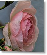 Pink Rose Metal Print by Leif Sohlman
