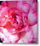 Rose With Touch Of Pink Metal Print