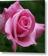Pink Rose Perfection Metal Print by Rona Black