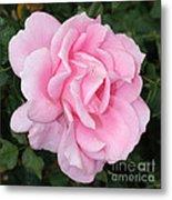 Pink Rose Square Metal Print