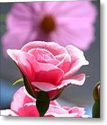 Pink Rose With Cosmo Metal Print