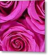 Pink Roses 2 Metal Print