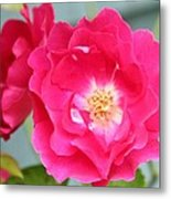 Pink Roses Metal Print by Cathie Tyler